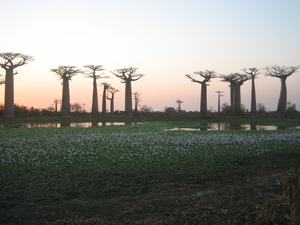 29-allee-baobabs-et-lac