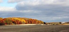 A Harvested Wheat Field near Janesville - Rock County, Wisconsin