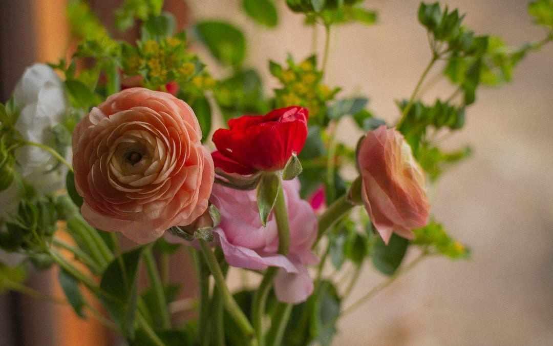 Ephemera: Five Things That Brightened My Week