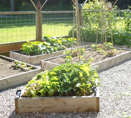 "Western Red Cedar raised garden beds should be at least 10"" deep"