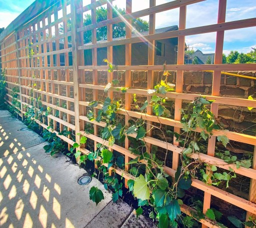 "Clear Western Red Cedar 2x2"" are used as framework for a eco-friendly living fence"