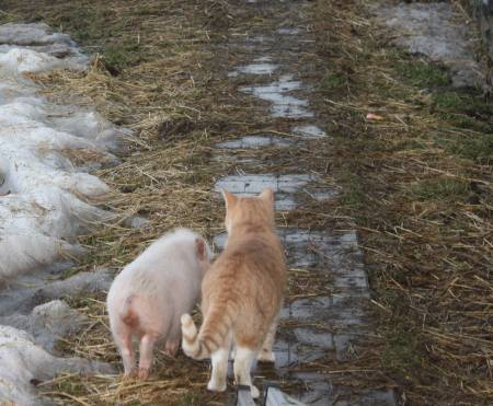 Herb the Cat with Pratchett the pig