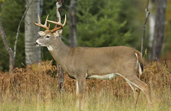 Important reminders for deer hunters | Cedar Springs Post Newspaper