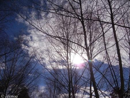 Sun through branches