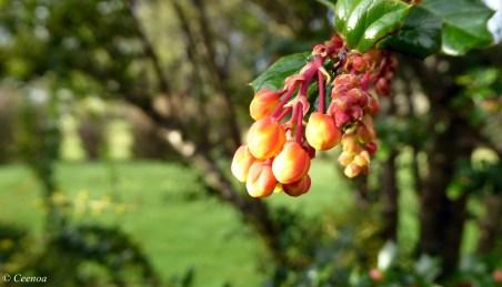 Winter Orange bud