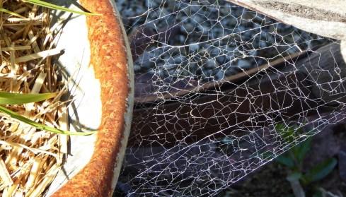 Cobwebs on Barrow