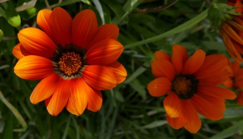 orange-roadside-flower