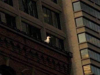 Seagull on Ledge