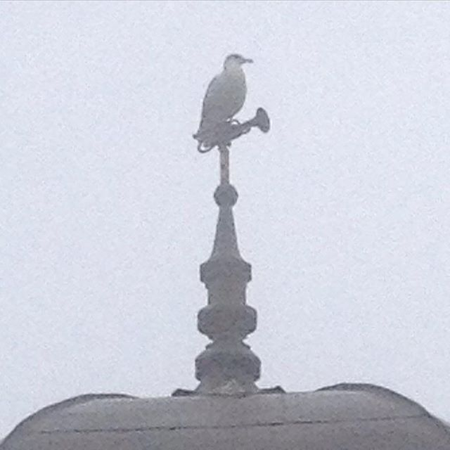 "The Saint John ""No Cornets are going to be played in the morning on my watch"" Gull #livelifeuptown"