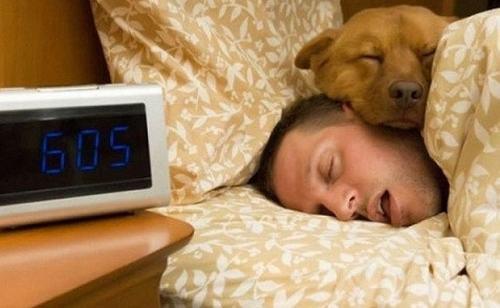 perro-en-la-cama