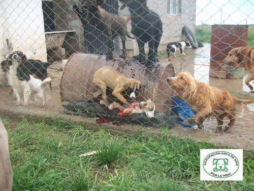 perros comiendose