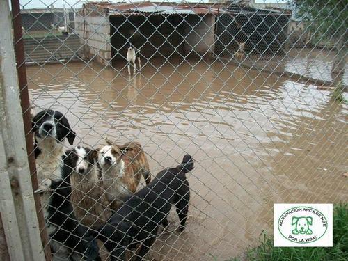 perros inundados