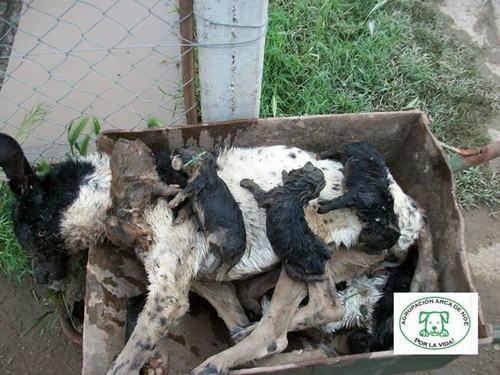 perros muertos con cachorros