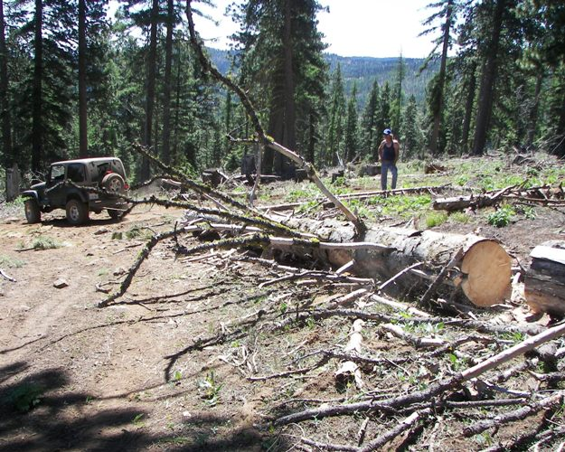 Photos: EWOR Ahtanum State Forest Green Dot Work Party Part 1 of 2 5