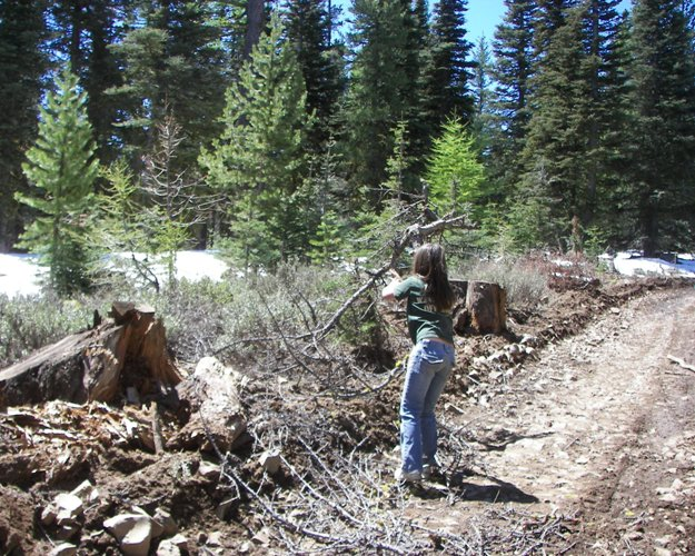 Photos: EWOR Ahtanum State Forest Green Dot Work Party Part 1 of 2 13