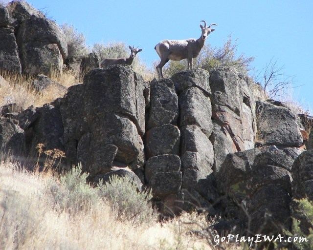Photos: Wenas Wildlife Area Exploring Run 10