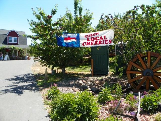Cherry Festival at Barrett Orchards 3