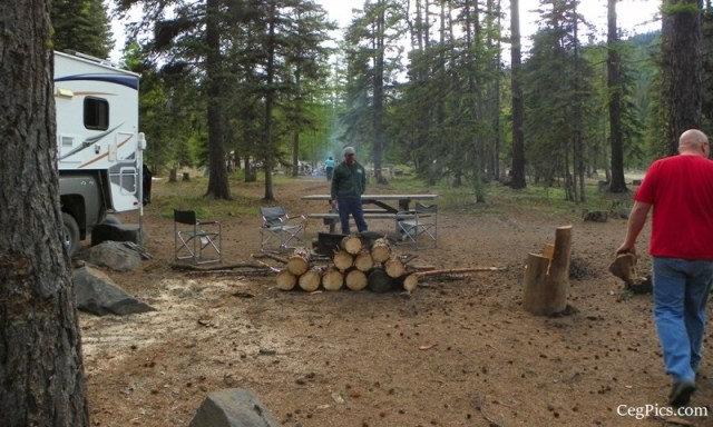 Tree Phones Camping Trip 1
