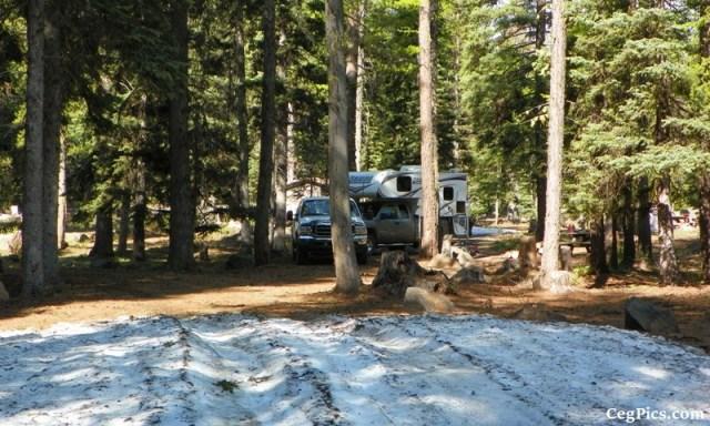 Tree Phones Camping Trip 7