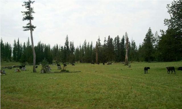 DNR/WDFW Naneum Ridge Field Trip 6