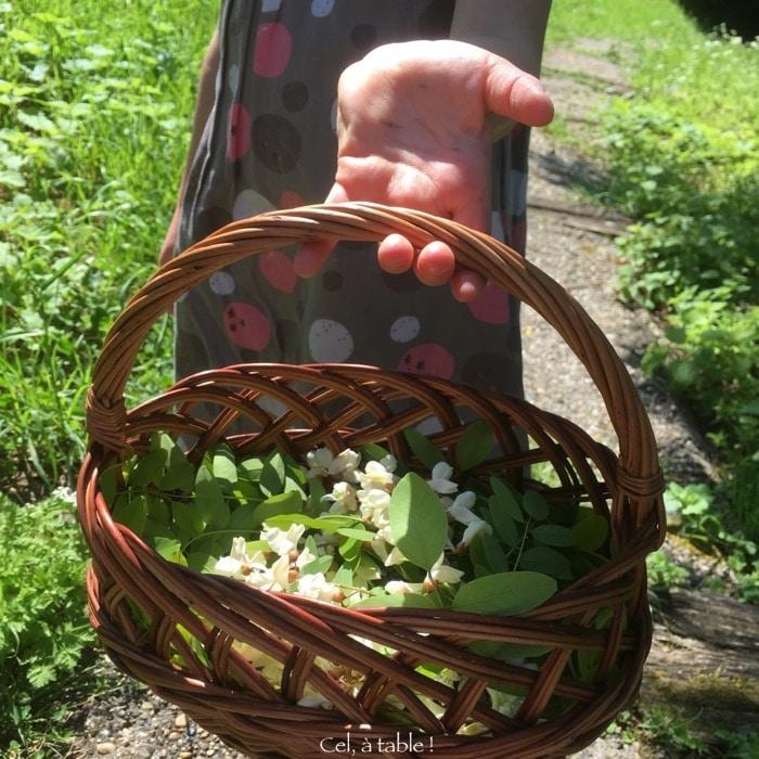 panier fleurs d'acacia