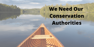 Media Release: Alarming Amendments – Provincial Government Introduces Motions that Further Restrict Conservation Authorities