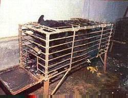 Ours mutilés en Chine