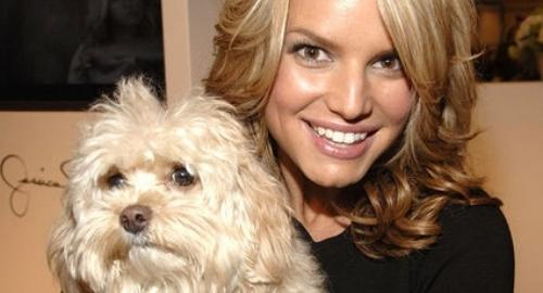 Jessica Simpson's Missing Dog Daisy Found