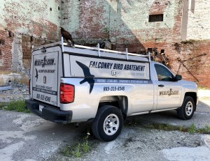 Alcoa pest control, Alcoa wildlife control, American pigeons, bat pest control, bats in the Smoky Mountains, Blount County pest control, Blount County wildlife control, Dandridge pest control, Dandridge wildlife control, East Tennessee bats, Farragut pest control, Gatlinburg pest control, Gatlinburg wildlife control, how did pigeons come to the US?, how to get a raccoon out of your house, how to get rid of squirrels in your house, how to trap a bat, how to trap a raccoon, humane pest control, Jefferson City pest control, Knox County pest control, Knox County wildlife control, Knoxville pest control, Knoxville wildlife control, Lenoir City pest control, Lenoir City wildlife control, Loudon country wildlife control, Loudon County pest control, Morristown pest control, Morristown wildlife control, Newport pest control, Newport wildlife control, Oak Ridge pest control, Oak Ridge wildlife control, pest control bats, pest control raccoons, Pigeon Forge pest control, pigeon pest control, raccoon pest control, raccoon traps, safe pest control methods, Sevier County humane pest control, Sevier County wildlife control, Sevierville pest control, Smoky Mountain raccoons, Smoky Mountain wildlife, squirrel pest control, what to do if there's a bat in your house, Wildlife in the Smoky Mountains, wildlife pest control Sevierville