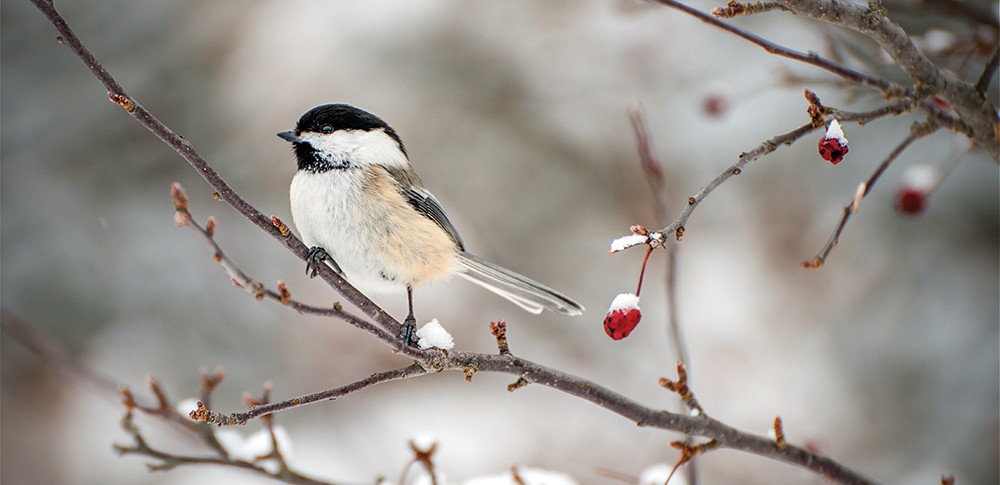Little bird on a branch in the winter