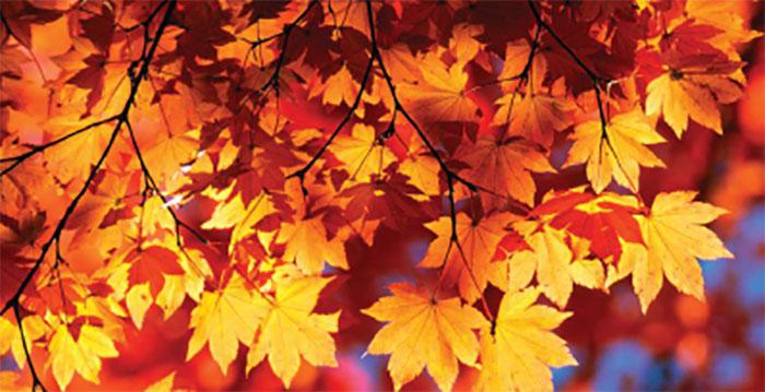 Adams County, PA Fall