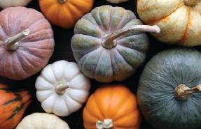pumpkins in Gettysburg, PA