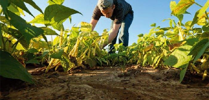 Farming in Adams County