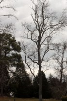 Winter Trees (1)