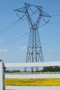 A horse pasture next to an electric tower...