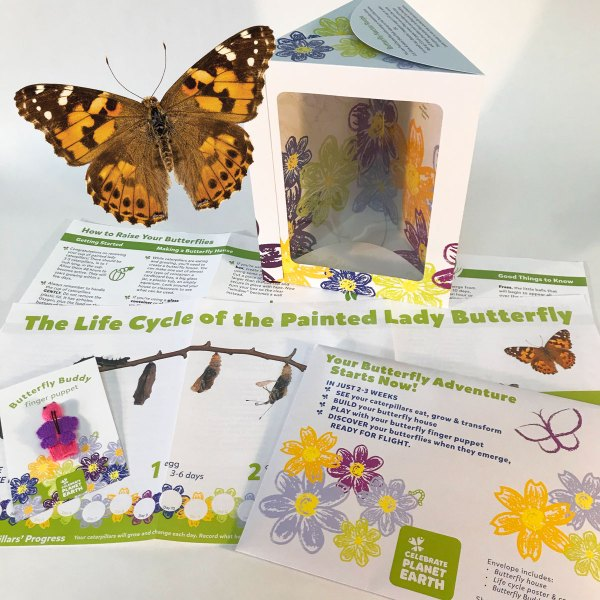 Basic Butterfly Kit
