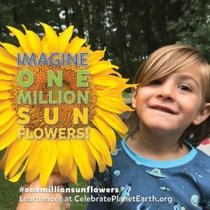 One Million Sunflowers!