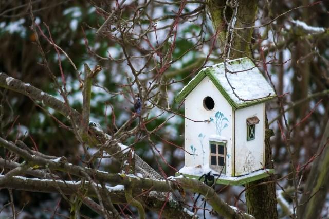 bird-feeder-3878421_1280