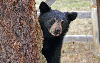 peek-a-boo-bear