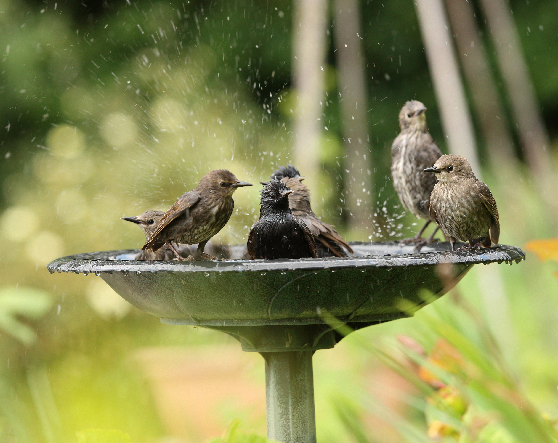 Providing Water For Birds