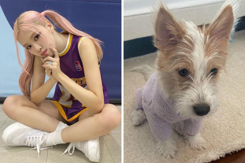 Rosé, de BLACKPINK, presentó a su perrito