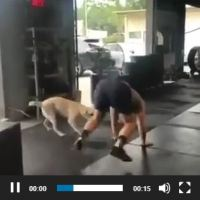 Exercise Fun: Man and Dog