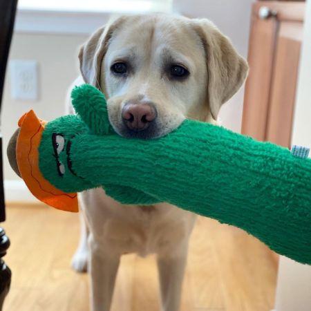 Katie Pavlich's Dog