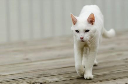 Cat walk...
