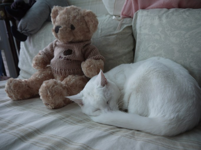 Sleep with the bear!