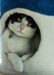 Milky is so shy...