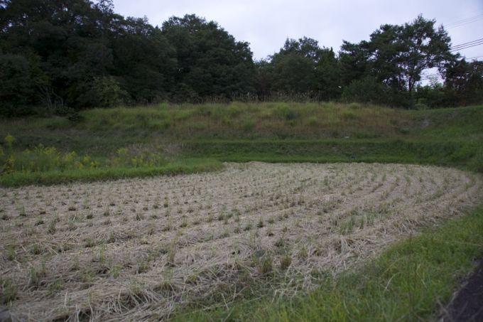 agricul2.jpg