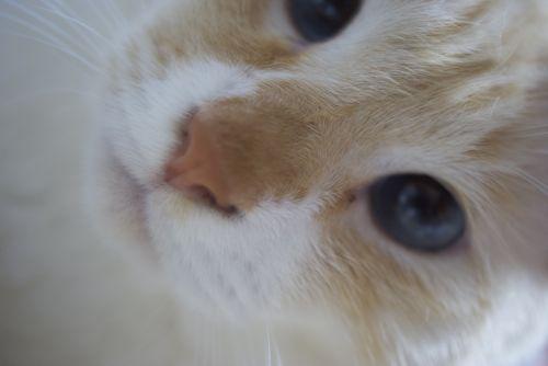 cat3.jpg