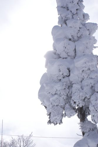 野沢温泉 【2010年1月8日~1月11日】