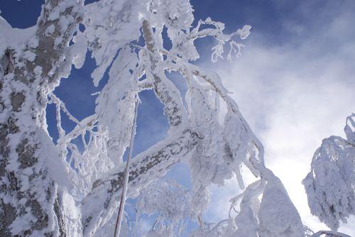 今年のスキー旅行 【2011年1月8日~1月10日】